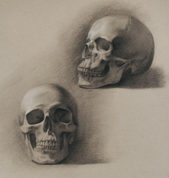 © 2013 Aron Hart, Skull Studies, charcoal and white chalk on toned paper